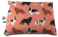 Cavalier King Charles on Salmon Background