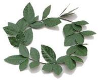 Green Laurel Leaf Headband.