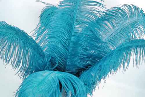 "13""-15"" Turquoise Ostrich Plume Feathers for Wedding Centerpiece - Pack of 10 Feathers"