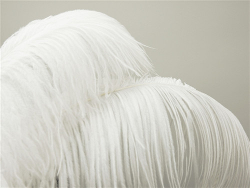 "13""-15"" White Ostrich Plume Feathers for Wedding Centerpiece - Pack of 10 Feathers"