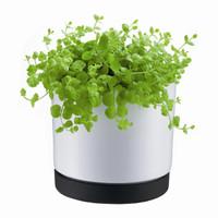 Bodum POT Flower Pot
