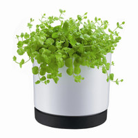 Bodum POT Flower Pot