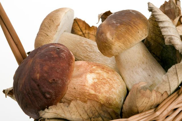 Wild Forest Mushroom from Poland!