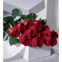 12 Red Roses Gift Boxed