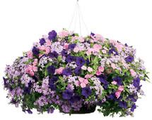 Deluxe Blooming Hanging Basket