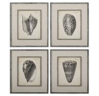 Vintage Diderot Shells Wall Art, Set Of 4