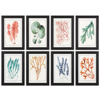 Colorful Algae Framed Art, S/8