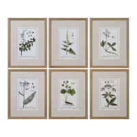 Green Floral Botanical Study Prints S/6