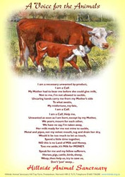 Hillside Cow & Calf Poem Tea Towel
