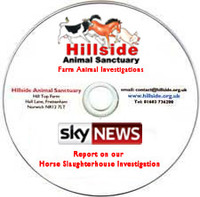 Sky News Report (on DVD) showing Hillside's Horse Slaughterhouse Investigation (Jan 19th 2013)