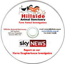 Sky News Report (on DVD) showing Hillside's Horse Slaughterhouse Investigation (Jan 19th 2013)