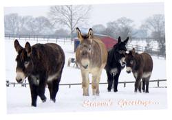 X15.  Hillside 2015 Sanctuary Scenes Christmas Cards