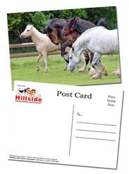 Hillside Sanctuary Scenes Postcards