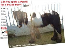'Spare a Pound for a Pound Pony' Fundraising Postcard
