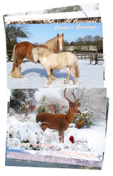 Featuring Hillside's rescued animals in winter