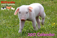 Hillside Sanctuary Scenes 2017 Mini Calendar