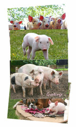 Hillside Piggy Greeting Cards