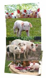 Hillside Piggy Greeting Cards