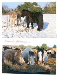 XX17. Hillside Sanctuary Scenes Christmas Cards