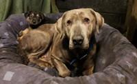 Hillside Dog Rescue Appeal