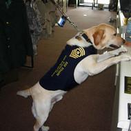 Service Dog Jacket - Blue