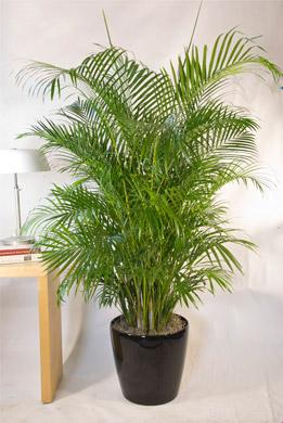 Top 10 best indoor plants houston interior plants for Top 20 indoor plants