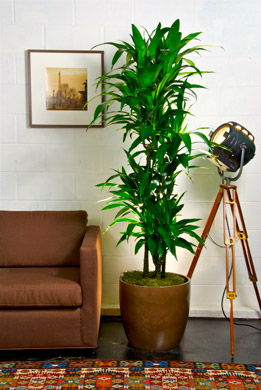 TOP 10 Best Indoor Plants - Houston Interior Plants