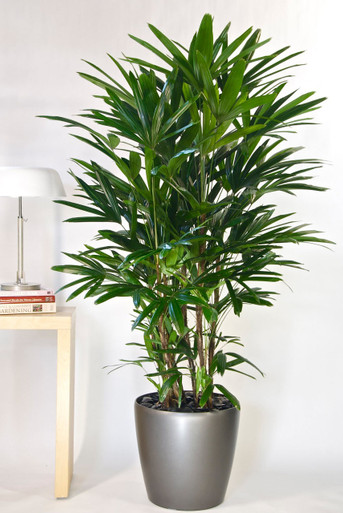 Houston\'s Online Indoor Plant & Pot Store - Interior Plants For ...