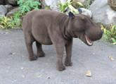 Hansa Happy Hippo, Ride-On (3025)