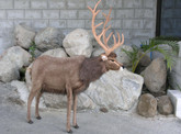 Hansa Reindeer, Large 48''