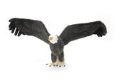 Hansa Eagle, Life Size 25''