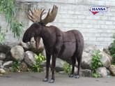"Hansa Moose, Studio Size 107""L x 89""H"