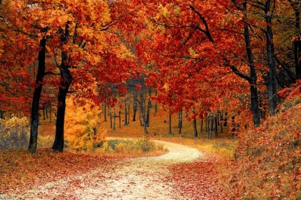 fall-autumn-red-season