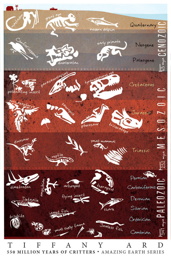 """FOSSILS! Amazing Earth Series by Tiffany Ard (mini poster 12x18"""")"""