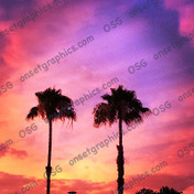 Palms in Colored Sky
