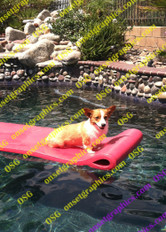 Corgi Dog on Raft in Pool