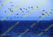 Seagulls Sky Ocean