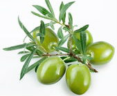 olives-wild-staff-favorite.jpg