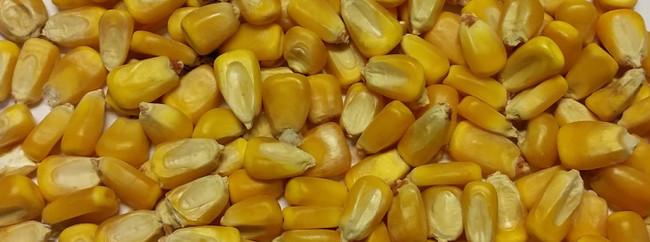 Super Corn