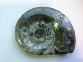 Ammonite (0449)