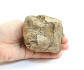 Rough Dinosaur Bone Fossil