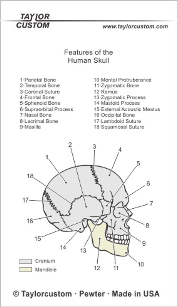 skull earrings packaging