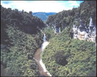 Limestone bluff, Porarari Gorge, Paparoa National Park