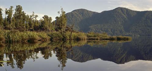 Kahikatea grove reflected in Lake Paringa, Westland
