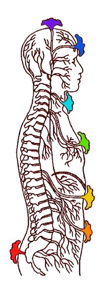 chakra-anatomy-web.jpg