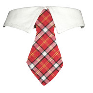 Richie Shirt Dog Collar Tie