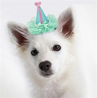 Pretty Party Dog Hat Clip-On