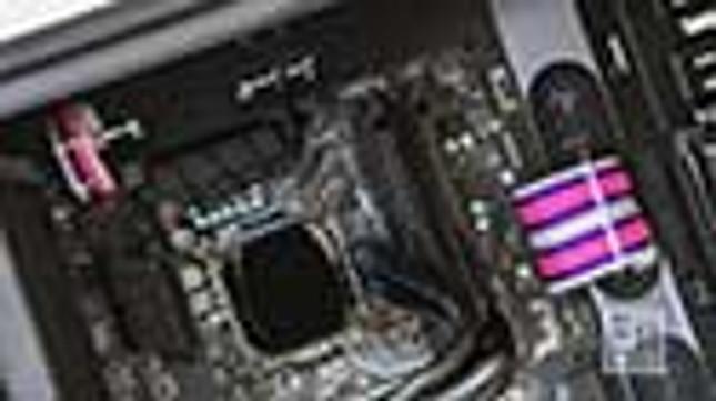 Acid Purple | Neon Pink | White