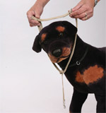step1-k9-bridle-fitting-instructions.jpg