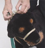 step4-k9-bridle-fitting-instructions.jpg